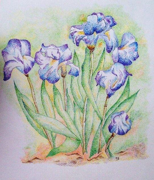 Iris,suite et fin