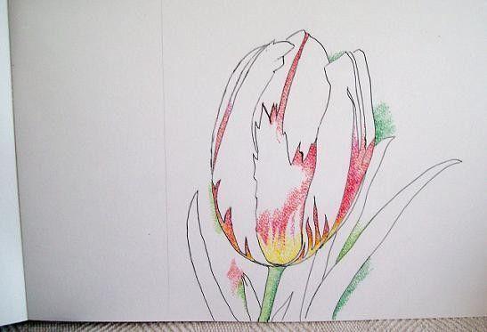 Tulipe.......